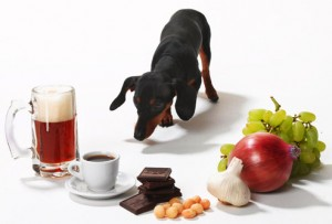 Items that are Poisonous to Pets