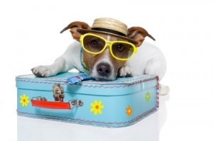 vacation dog, traveling with pets