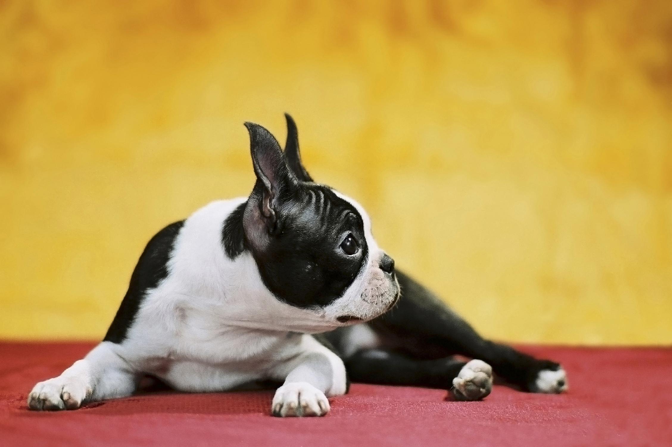Shake It Off: Deciphering the Trembling Dog | Billings