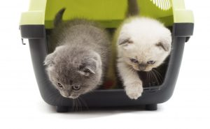 kittens jump out of a plastic box for transport on a white backg