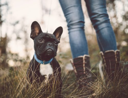 Top 10 Myths About Heartworm Disease in Your Pet
