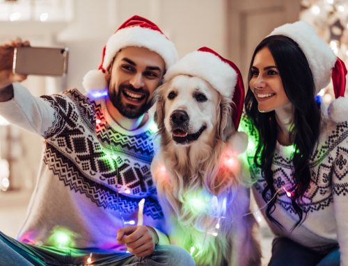 Our Answers to Your Questions About Holiday Travel With Your Pet