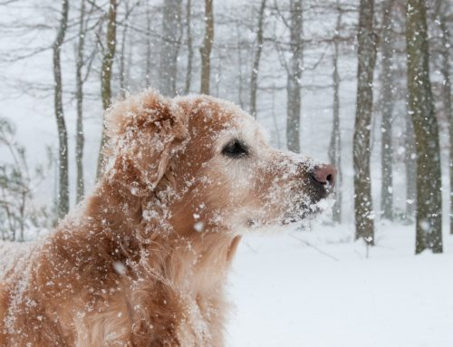 6 Tips to Avoid Winter Hazards for Your Pet
