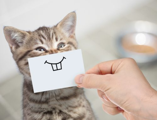 Got Something in Your Teeth? 6 Common Dental Problems in Pets