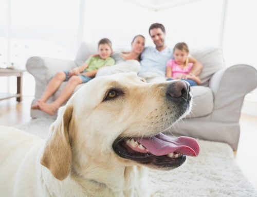 Avoid Panic During a Pandemic: 5 Ways to Simplify Caring for Your Pet While Quarantined