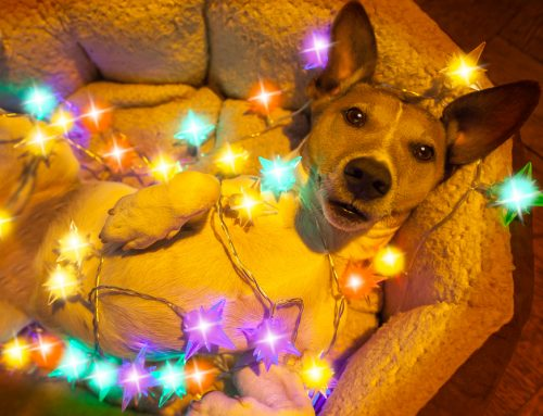 5 Ways to Pet-Proof Your Home for a Safe and Happy Holiday