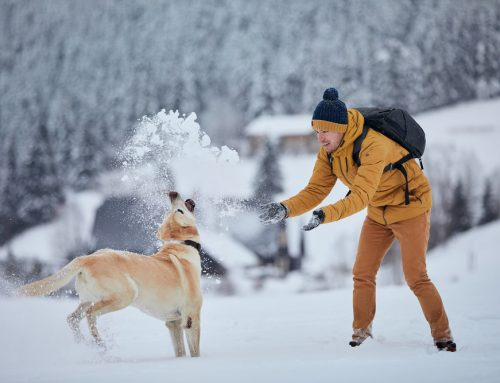 5 Ways to Stay Active with Your Pet All Year