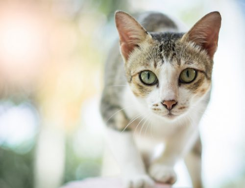 5 Ways to Have a Happy and Healthy Indoor Cat