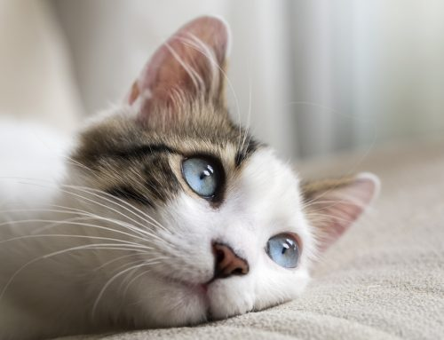 Kidney Failure in Dogs and Cats