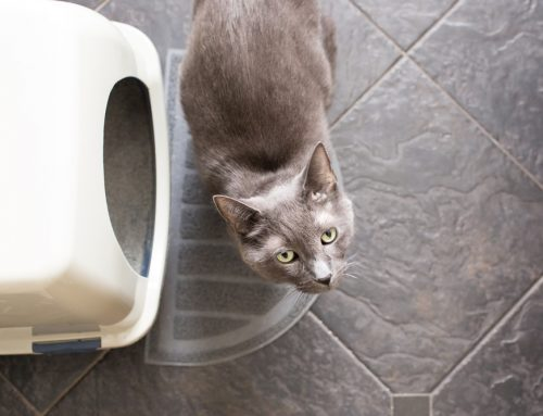 Decoding Messages—Why Your Cat is Urinating Outside the Box
