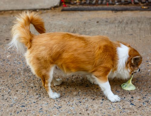 FAQs about Vomiting Dogs