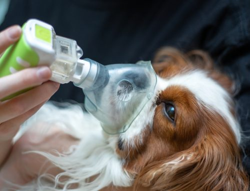 10 Veterinary Emergency Situations